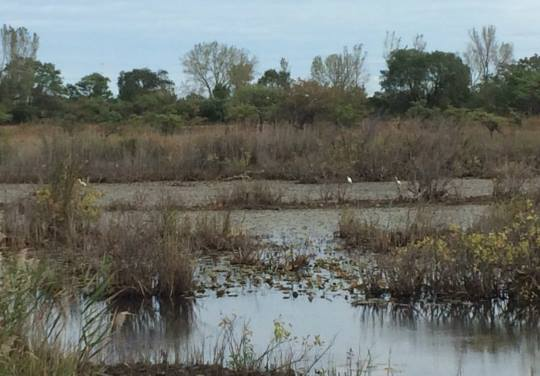 Ecological Risk Assessment by SRS in Lake County, IN